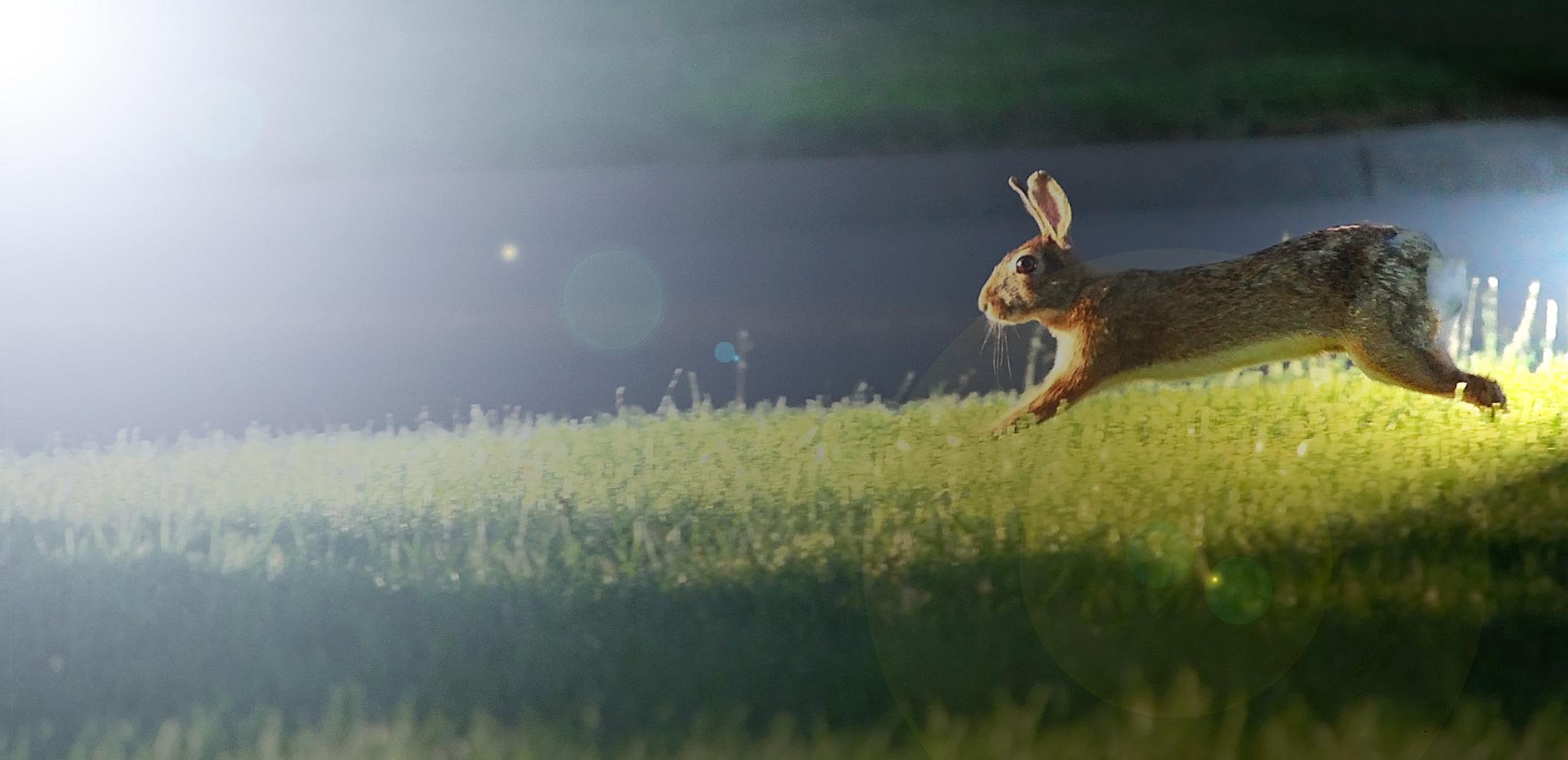 ya tavşan kaçarsa